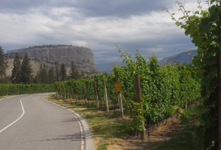 Driving up to the beautiful vineyards.