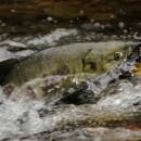 David Suzuki: Reconciliation requires recognizing rights-based fishing